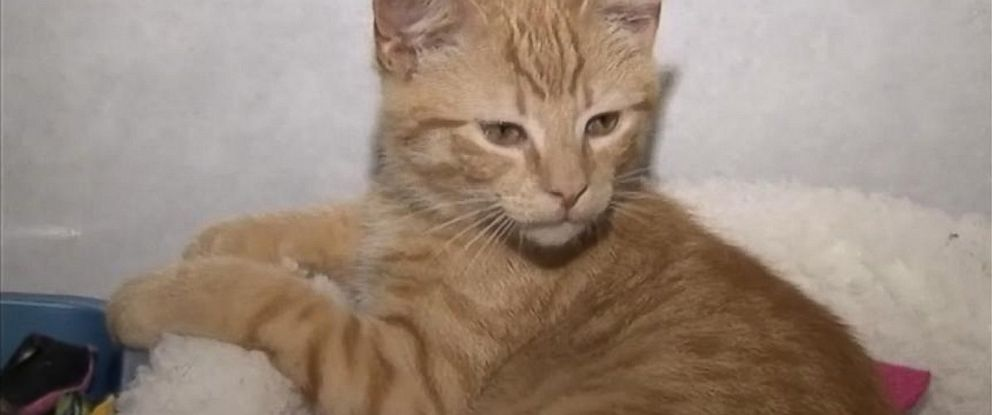 PHOTO: A former wrestler nabs cat thieves.