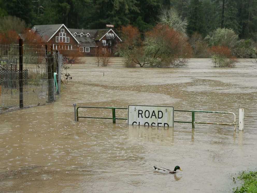 PHOTO: A duck makes its way as Russian River floods, Jan. 10, 2017, in Monte Rio, California.