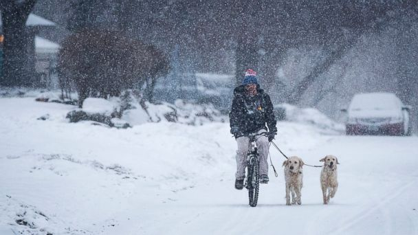 PHOTO: A man bikes with his dogs in north Minneapolis, Jan. 30, 2017.