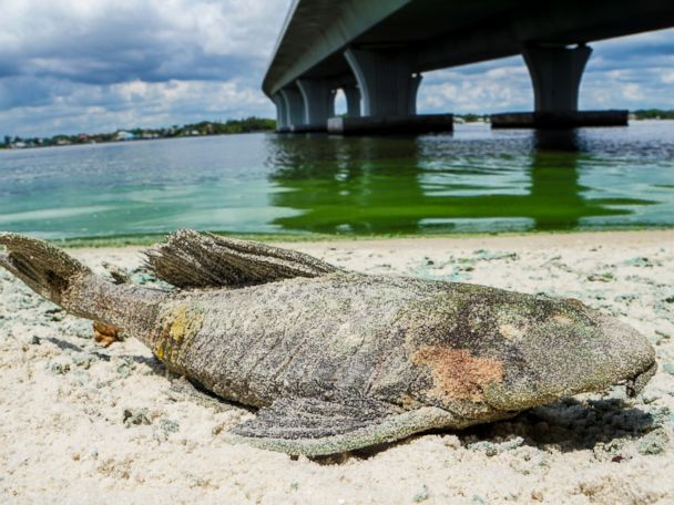 'Vile' Algae as Thick as 'Pea Soup' Clogs Up Florida's Waterways