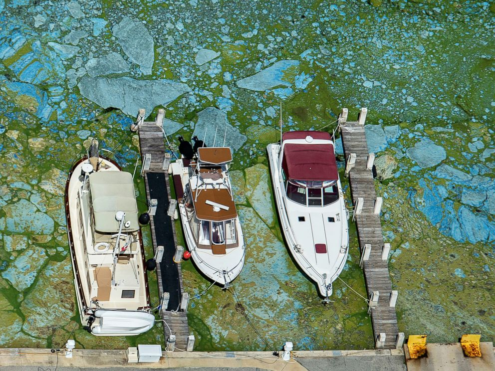PHOTO: Boats docked at Central Marine in Stuart, Fla., are surrounded by blue green algae, June 29, 2016. Officials want federal action along the stretch of Floridas Atlantic coast where the governor has declared a state of emergency over algae blooms.