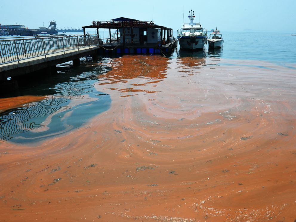 PHOTO: An algae called noctiluca scintillans mass propagated and caused red tide in Shenzhen, Guangdong, China on April 10, 2012.