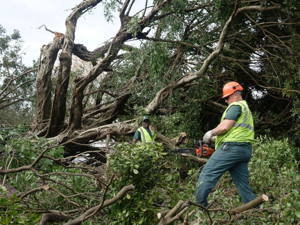 PHOTO: Workers cut limbs from a downed tree at Sand & Spurs equestrian park in Pompano Beach, Fla., Feb. 16, 2016.