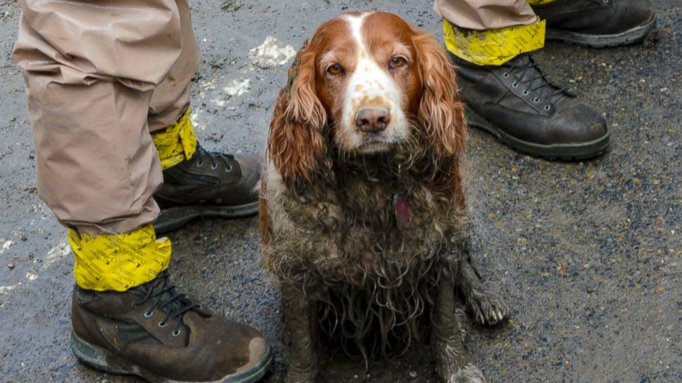 PHOTO: In this March 27, 2014 photo, a search dog waits to be washed by the feet of Washington National Guardsmen after working the debris field created by the mudslide near Oso, Wash.