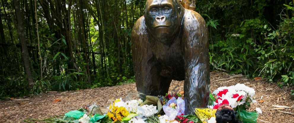 PHOTO:Flowers lay around a bronze statue of a gorilla and her baby outside the Cincinnati Zoos Gorilla World exhibit, days after a boy tumbled into its moat and officials were forced to kill Harambe, a Western lowland gorilla, May 30, 2016.