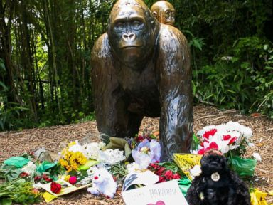 Police Investigating Gorilla Incident at Cincinnati Zoo