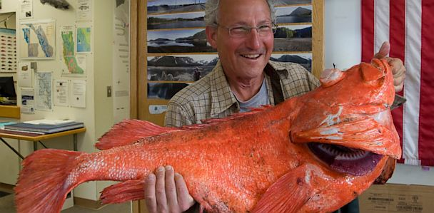 AP rockfish record catch jef 130702 33x16 608 Seattle Man Catches 200 Year Old Fish