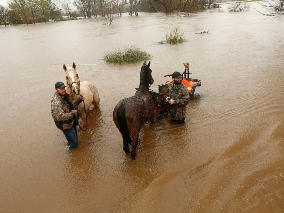 PHOTO: Two men secure two horses in rising floodwaters in Bossier Parish, La., March 10, 2016.
