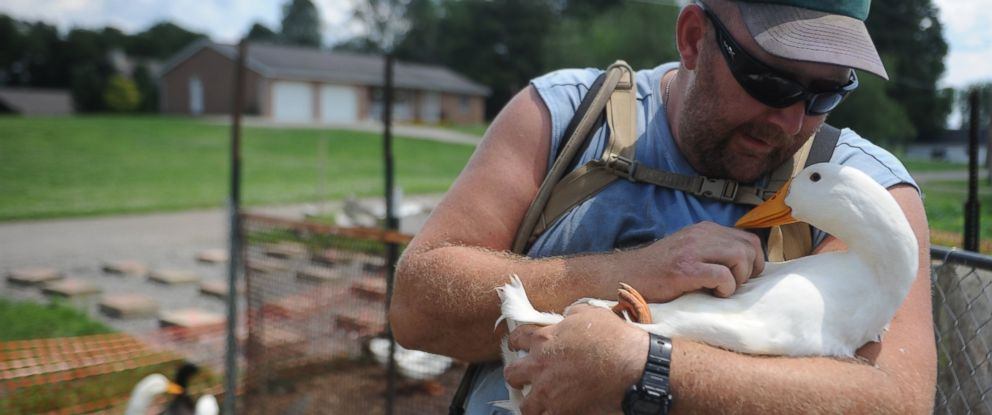 PHOTO: In this Thursday, July 10, 2014 photo, Iraq war veteran Darin Welker, 36, holds one of his ducks at his home in West Lafayette, Ohio.