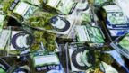 PHOTO: Packets of a variety of recreational marijuana named Space Needle are shown during packaging operations at Sea of Green Farms in Seattle, July 1, 2014.