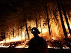 PHOTO: A firefighter watches for spot fires during a burnout operation while battling the Rim Fire near Yosemite National Park, Calif., on Sunday, Aug. 25, 2013.