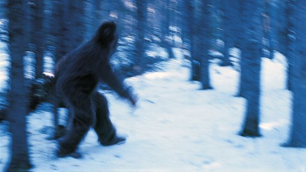 GTY bigfoot jef 131017 16x9 608 Scientist Reveals Abominable Snowman Is Really a Bear