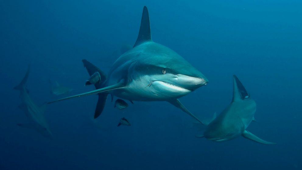 florida s shark bite capital of the world claims two