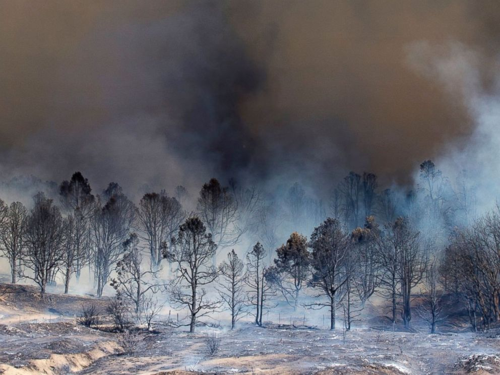 PHOTO: Smoke rises from a burned out grove of trees at the Blue Cut wildfire in Wrightwood, California, on Aug. 17, 2016.