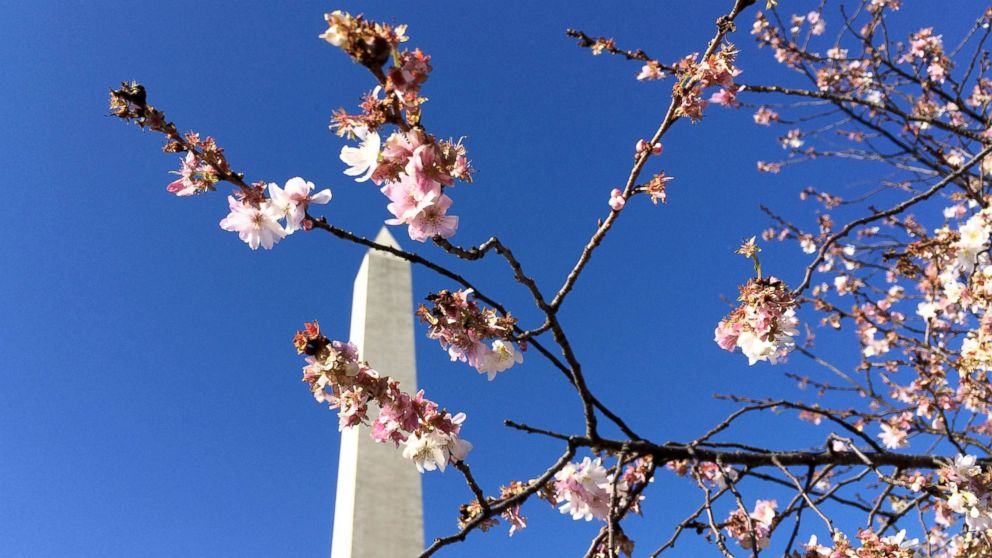 Washington Monument closed again after elevator gets stuck