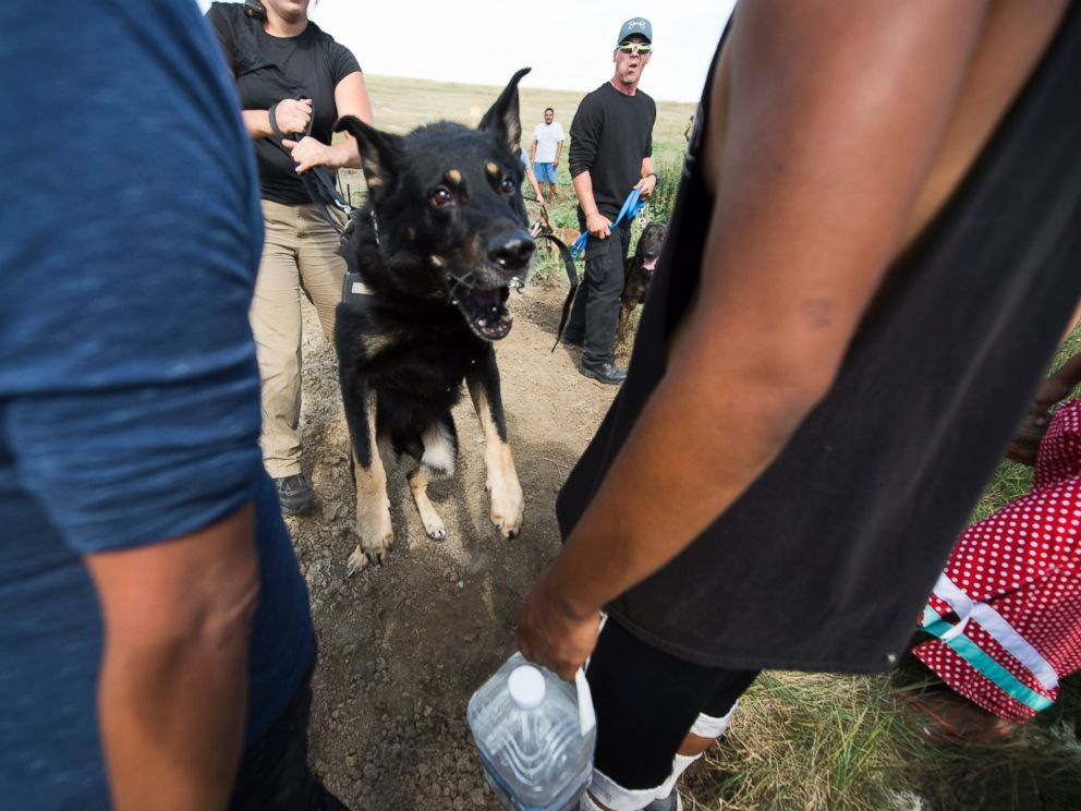 PHOTO: A guard dog handled by a private security guard lunges toward protestors during a demonstration near Cannonball, North Dakota, Sept. 3, 2016.