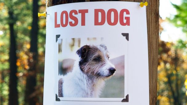 GTY lost pet poster 137068117 jt 131103 16x9 608 Lost Fido? Theres an App for That