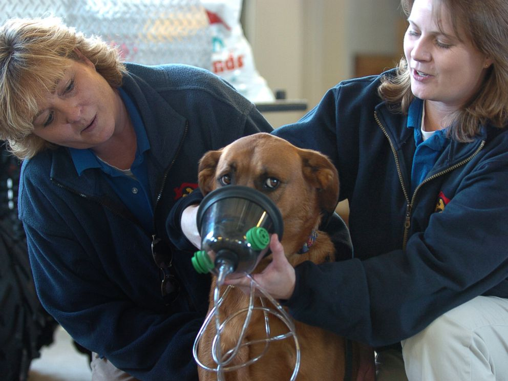 PHOTO: Carla Crabtree, left, and Stephanie Ellis, right, of Best Friends Pet Care demonstrate how an oxygen mask fits onto the snout of a dog in Westminster, Colo. on Feb. 15, 2007.