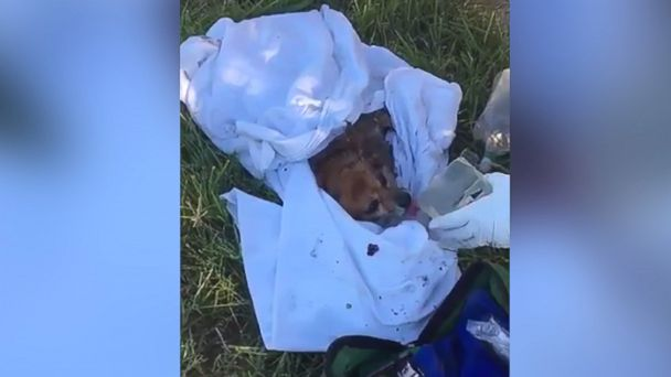 PHOTO: Firefighters from the Prince George's County Fire/EMS Department were able to revive a small dog they rescued from a burning home in Oxon Hill, Maryland.