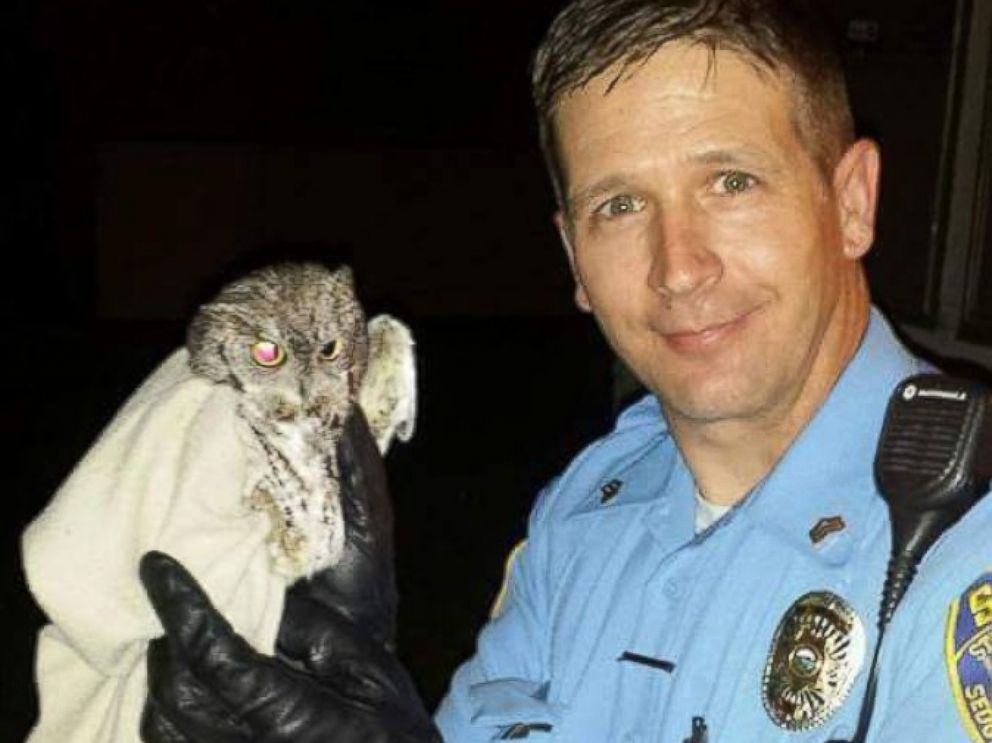 PHOTO: Today wasnt Sedgwick County Sgt. Justin Antles first time rescuing a bird of prey. Last year, he retrieved an owl that had flown into a Kansas home.