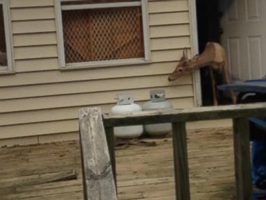 PHOTO: A deer is seen at a West Virginia home in an image released by the West Virginia Natural Resources Police, July 6, 2015.