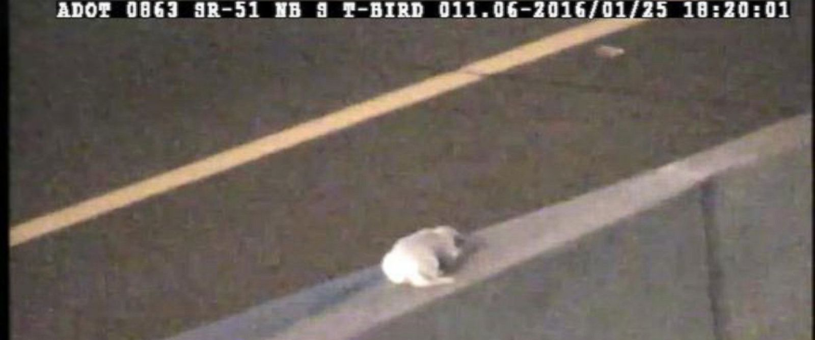 PHOTO: An Arizona Department of Transportation traffic operations center worker rescued a dog stranded in the middle of a Arizona State Route 51 near Phoenix during the evening rush hour on Jan. 25, 2016.
