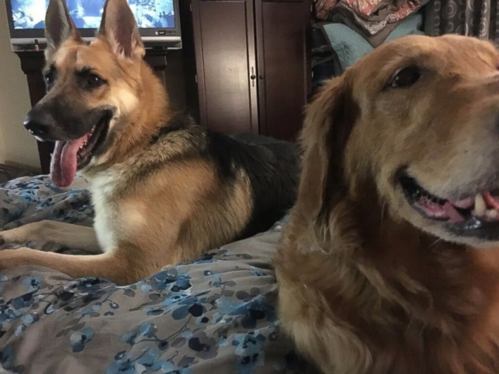 PHOTO: Haus even got the DeLucas 9-year-old golden retriever, Chloe, to start eating again after their previous German shepherd, Bailey, died.