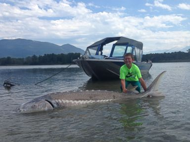 PHOTO: Kegan Rothman caught a 600-pound sturgeon in Chilliwack, British Columbia, on June 29, 2015.