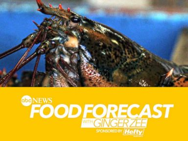 Food Forecast: The Secret to Maine's Thriving Lobsters