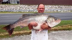 PHOTO: Lawrence Dillman caught a 65-pound, 2-ounce striped bass at Bull Shoals Lake in Missouri on May 21, 2015.