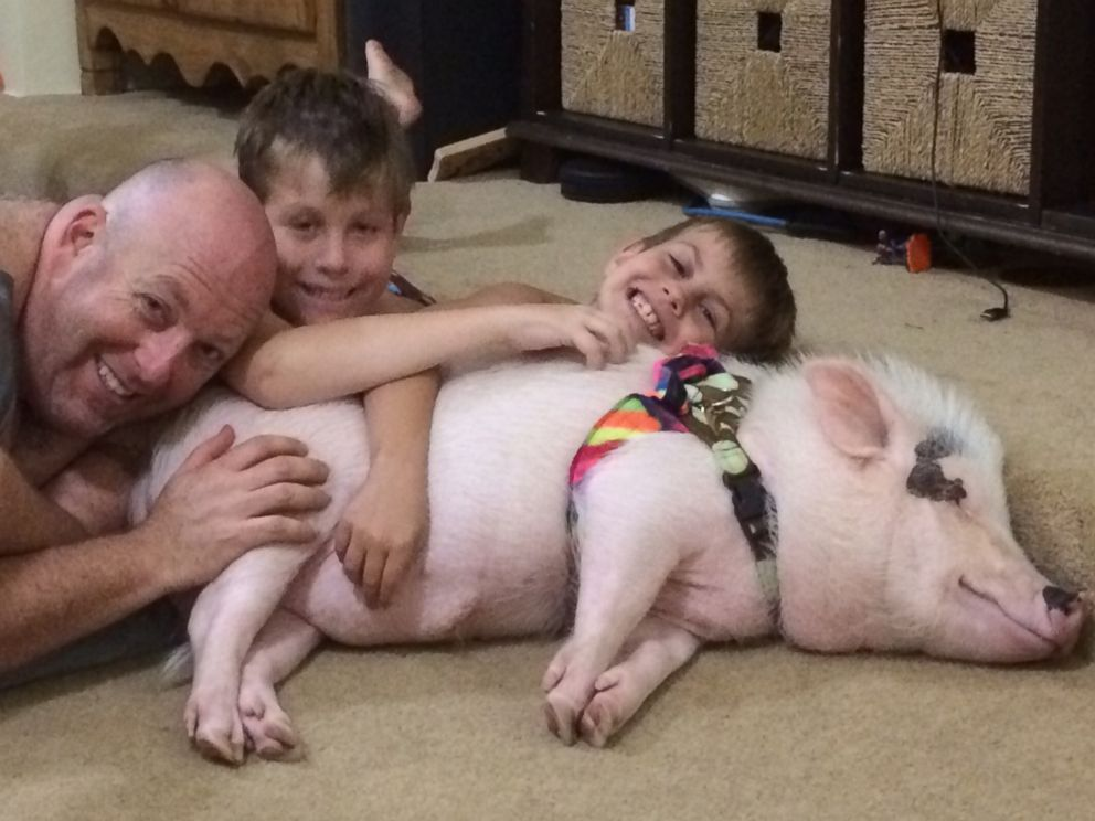 PHOTO: Rori Halpern says Wilbur, a potbellied pig, is 'a part of the family.'