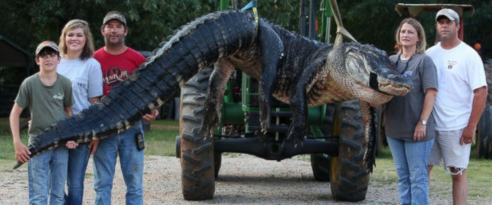 PHOTO: A monster alligator weighing 1011.5 pounds measuring 15 feet long is pictured in Thomaston, Ala. on Aug. 16, 2014.