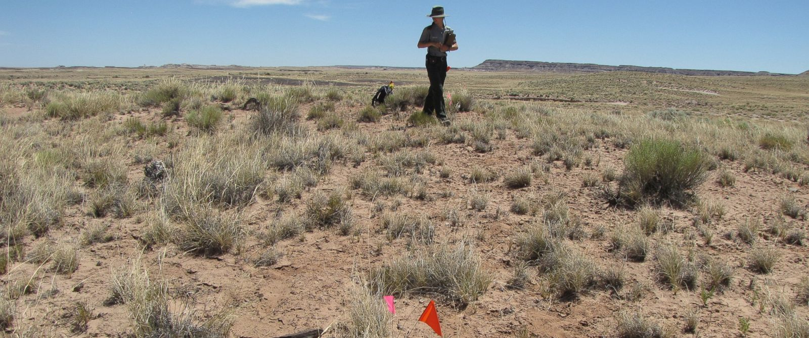 PHOTO: Archaeologists surveying land acquired by Petrified Forest National Park have found traces of two ancient villages. The flags mark a site where pottery was found.