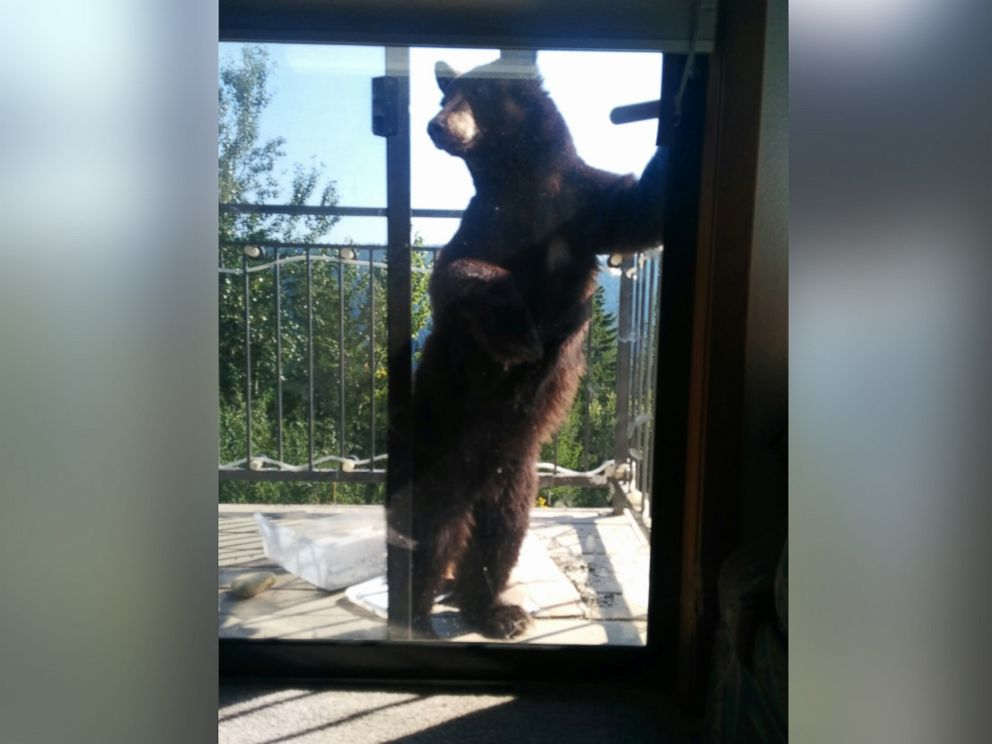 PHOTO: Doug Harder took these photos of a bear at his home in Idaho.