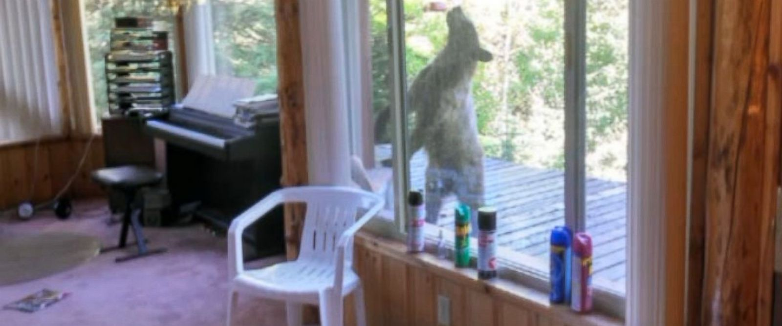 PHOTO: A bear entered Spencer Balls cabin in Big Cottonwood Canyon, Utah