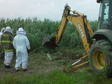 PHOTO: Crews exterminated a 15-20 foot long bee hive on a farm in Lozano, Texas on June 28, 2015, after a farmer died from a bee attack.