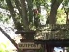 Escaped Orangutan Captured at Busch Gardens in Tampa
