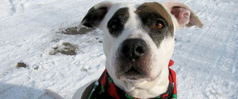 PHOTO: Dog With Cancer Gets Bucket List