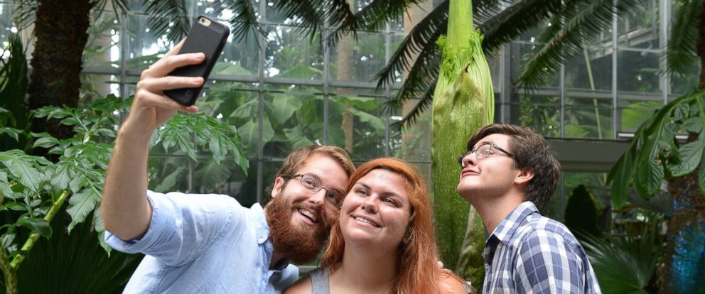 PHOTO: Visitors take selfie with a corpse flower that had not yet bloomed at the U.S. Botanic Garden, July 26, 2016.