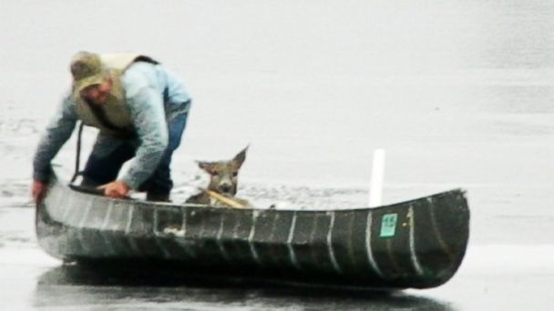 HT deer lake nt 131122 16x9 608 Instant Index: Hunter Rescues Deer Trapped in a Lake