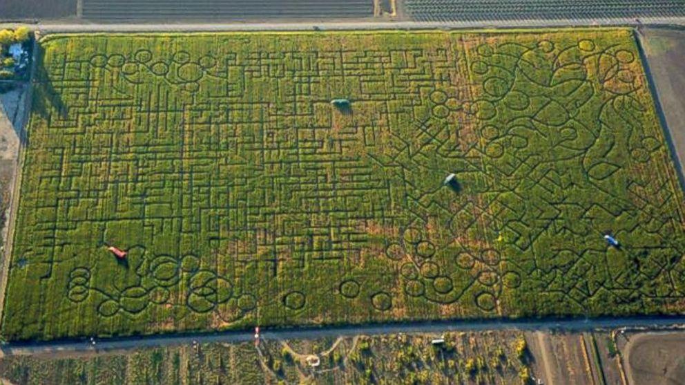 Corn Maze Kansas City
