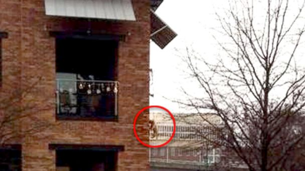 HT dog balcony facebook viral  v3 sk 131217 16x9 608 Dangling Dog Photo Goes Viral, Outrages SC Community