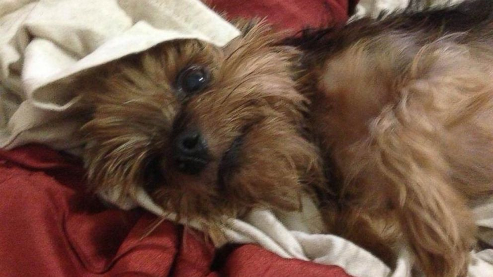 PHOTO: The dog, India, was robbed at gunpoint on early Tuesday morning.