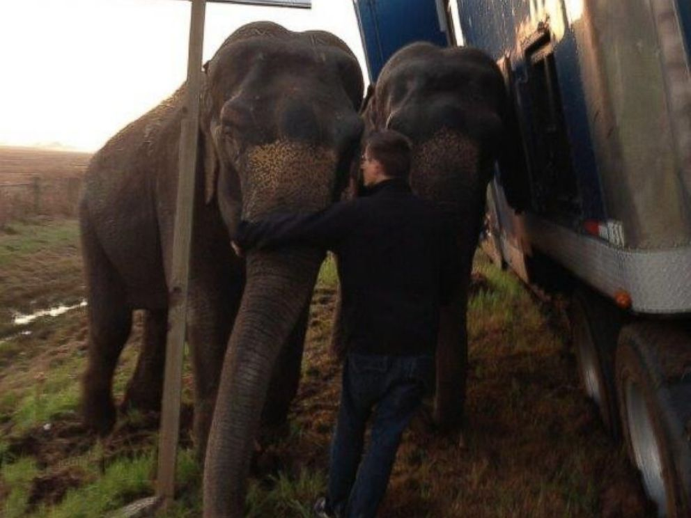PHOTO: Two elephants kept a stranded 18-wheeler from overturning after it became stranded on on Interstate 49 in Natchitoches Parish, Louisiana, Tuesday, March 24, 2015.