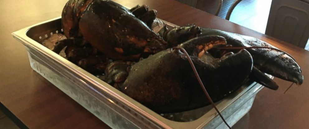 Larry the Lobster Narrowly Escapes Dinner Table at Florida Restaurant, Heads to Maine for ...