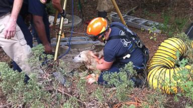 PHOTO: Firefighters and animal control officers in Henry County, Georgia, rescued a dog that got trapped in a 40-foot-deep well in McDonough, Georgia, on Sept. 26, 2016.