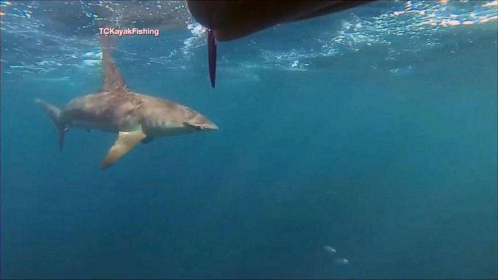 Hammerhead Shark Stalks Florida Kayakers for 2 Miles - ABC News