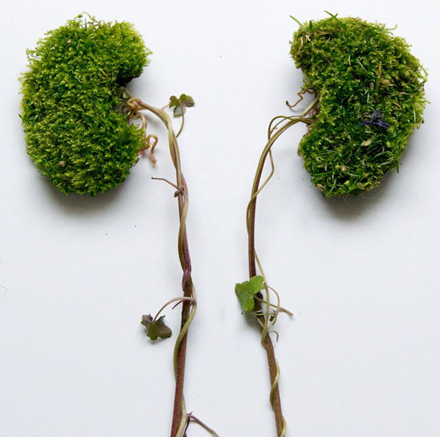 HT kidneys ml 131030 wblog Wild Plant Arrangements Turn Human
