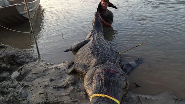 HT largest alligator 02 jef 130902 16x9 608 727 Pound Alligator Smashes State Records