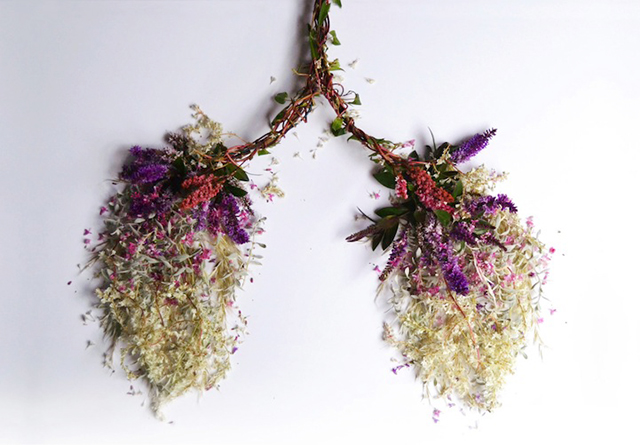 HT lungs ml 131030 wblog Wild Plant Arrangements Turn Human